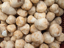 Straw mushroom Royalty Free Stock Images