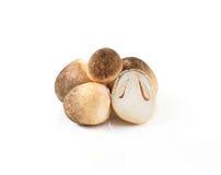 Straw mushroom Stock Photo