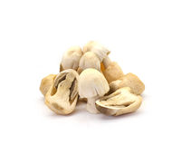 Straw Mushroom Stock Photo