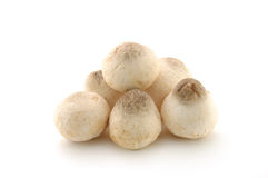 Straw mushrooms Royalty Free Stock Photos