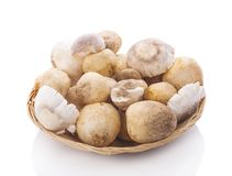 Straw mushrooms in isolated white background. Straw mushrooms in isolated white Royalty Free Stock Images