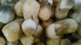 Straw mushrooms Stock Photos