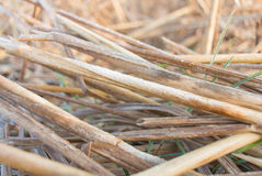 Straw. Orange straw on the field in drought Stock Images