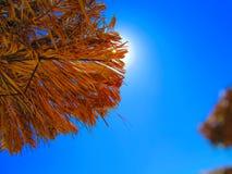 Straw Parasol fotografering för bildbyråer