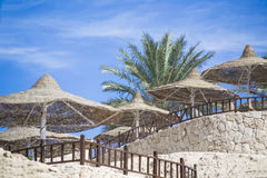 Straw parasols and palm tree on the beach resort, Stock Photo