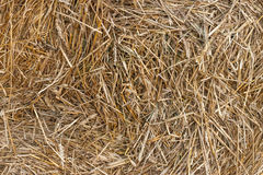 Straw. The photo of straw packed into a briquette after harvesting Stock Images