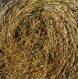 Straw. Picture a yellow-green straw, hay, grass, texture stock photography