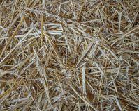 Straw on a pile in a warehouse stock image