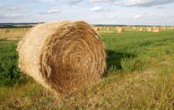 Free Straw Piles Royalty Free Stock Images - 6547459
