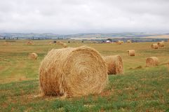 Straw piles in autumn field Stock Photos