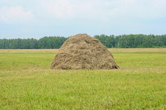 Straw prepared as animal feed Royalty Free Stock Photo