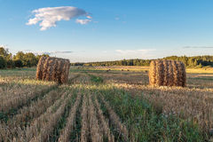 The straw is pressed into bales. In the field Royalty Free Stock Photos