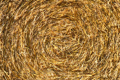 Straw pressed in a round bale Stock Image