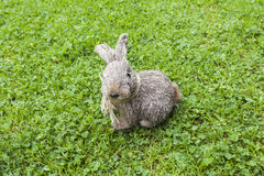 Straw rabbit. A straw rabbit sitting in the grass Royalty Free Stock Photography