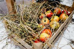 Straw upon red apples in a crate. stock images