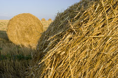 Straw reels. Reels of straw left on the field Stock Photography