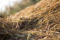 straw from rice a background Stock Image