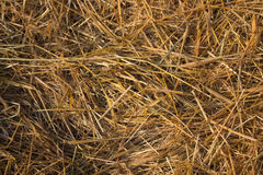 straw from rice a background Royalty Free Stock Images