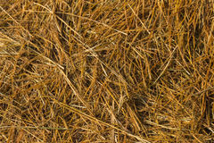 straw from rice a background Stock Photo