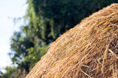 straw from rice a background Royalty Free Stock Image