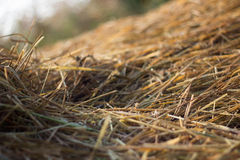 straw from rice a background Royalty Free Stock Photos
