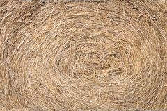 Straw from rice a background Stock Photos