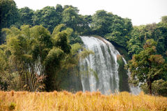 Straw in rice field front of Ban Gioc waterfall in Vietnam. Royalty Free Stock Photography