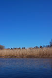 Straw river shore and clear blue sky Royalty Free Stock Photos