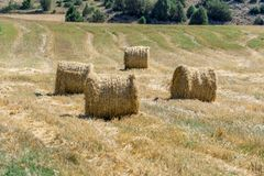 Straw role in the field royalty free stock photos