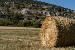 Straw role in the field stock images