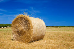 Straw roll bale Royalty Free Stock Image