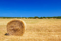 Straw roll bale Stock Photos