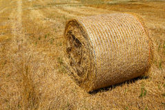 Straw roll bale Royalty Free Stock Photography