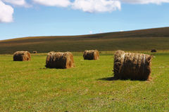 Straw roll bale on the field of farmland Royalty Free Stock Photography