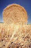 Straw roll on the field Stock Photo