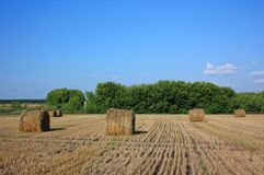 Straw in a roll of the slant field Royalty Free Stock Photos