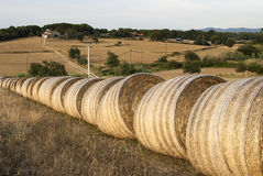 Straw rolls. After the harvest landscape Stock Images