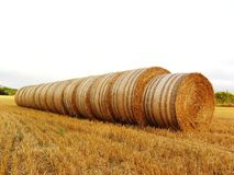 Straw rolls. In the field Stock Photography