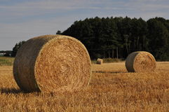 Straw rolls in evening light Stock Photos