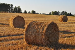Straw rolls in evening light Royalty Free Stock Photography