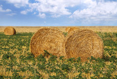 Straw rolls in the field. Straw rolls in the farm field Stock Photo