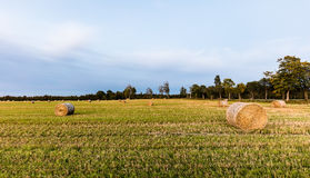 Straw Rolls on a field. After a harvest Royalty Free Stock Image