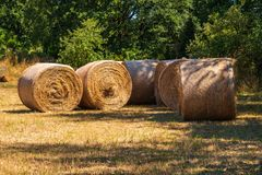Straw rolls on a field in summer stock image