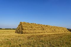 Straw rolls stacked on an open area in a mowed field in autumn in September. Moscow region, Russia. royalty free stock image