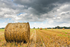 Straw rolls on a stubble field Stock Photography