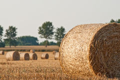 Straw rolls on summer farmer field Royalty Free Stock Photos