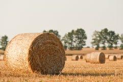 Straw rolls and wheat on farmer field Stock Photos