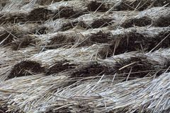 Straw roof Stock Image