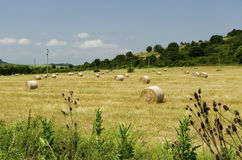 Straw round bales in a field during the summer harvest. And blue sky with clouds Royalty Free Stock Photography