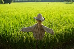 Scarecrow and rice fields Royalty Free Stock Photography